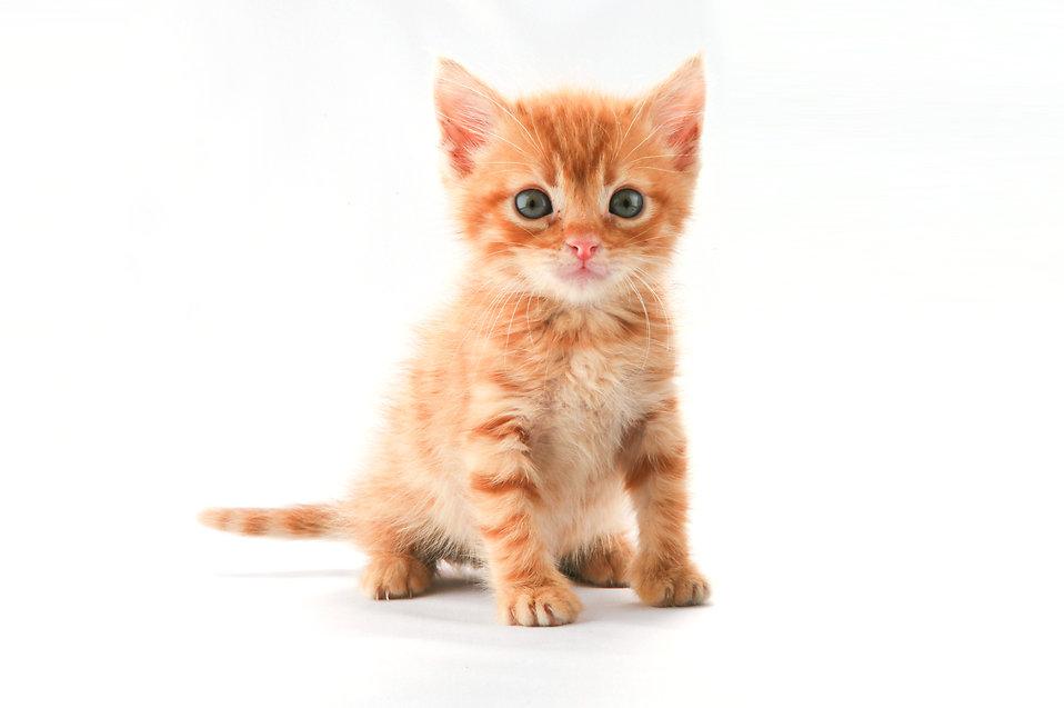 Slotsdyrlægen behandler også mindre katte og hunde